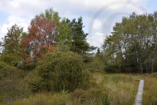 0175-Hohe Venn - Belgien-Hochmoor