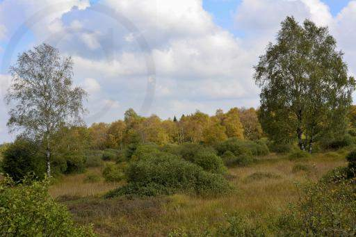 0177-Hohe Venn - Belgien-Hochmoor