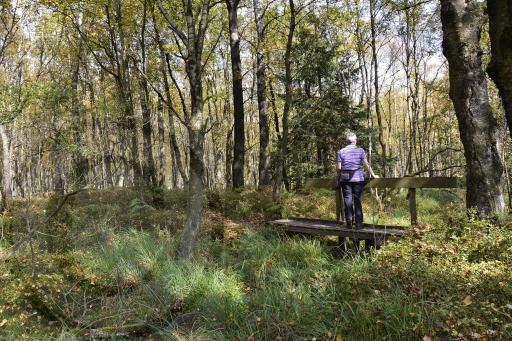 0178-Hohe Venn - Belgien-Hochmoor