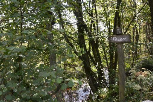 0180-Hohe Venn - Belgien-Hochmoor