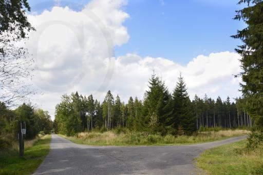 0181-Hohe Venn - Belgien-Hochmoor