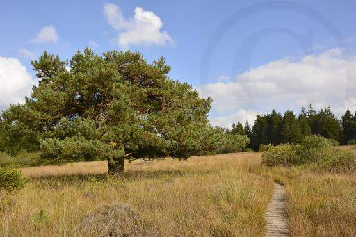 0182-Hohe Venn - Belgien-Hochmoor