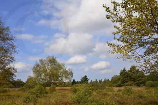 0185-Hohe Venn - Belgien-Hochmoor