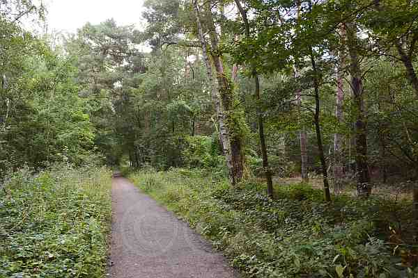 0214-Wanderweg 52 Drover Heide