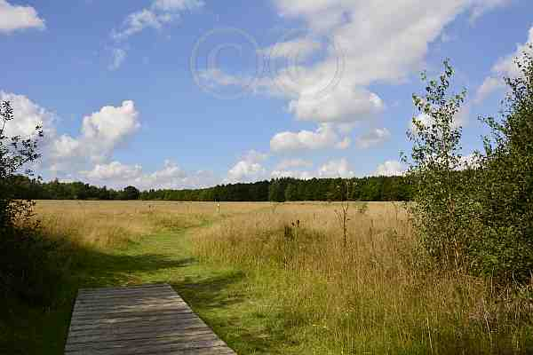 0217-Wanderweg 52 Drover Heide
