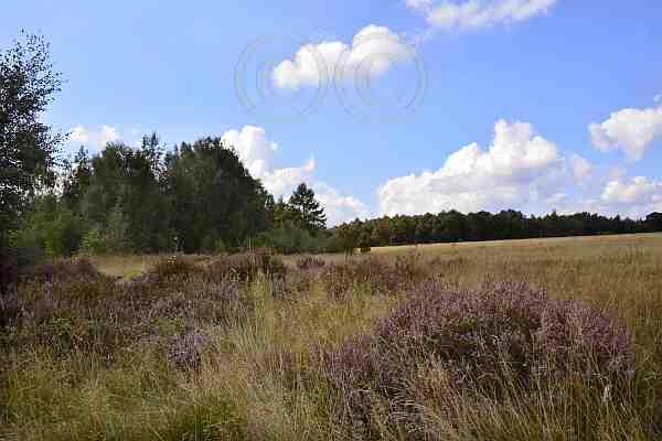 0219-Wanderweg 52 Drover Heide