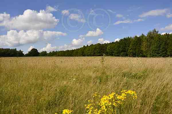 0221-Wanderweg 52 Drover Heide