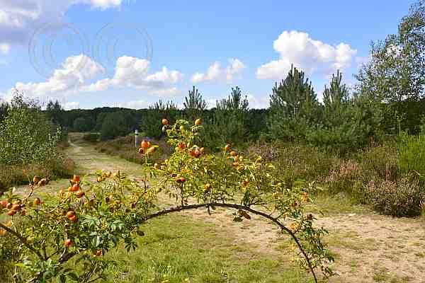 0222-Wanderwege-Drover Heide