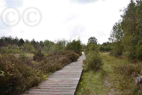 0225-Wanderwege-Drover Heide