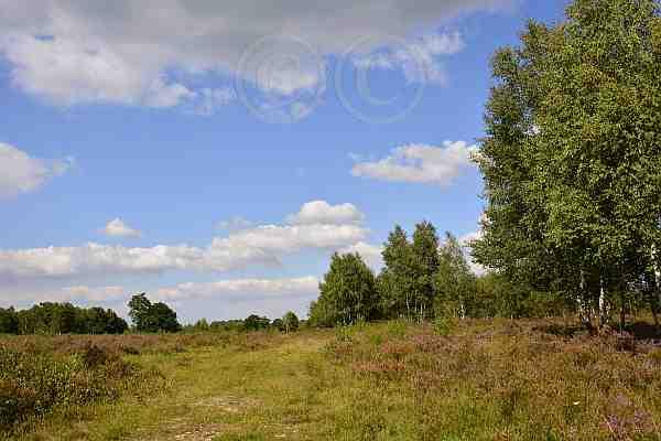 0237-Wanderwege-Drover Heide