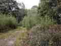 0216-Wanderweg 52 Drover Heide