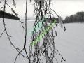 winter-024