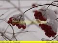 winter-033