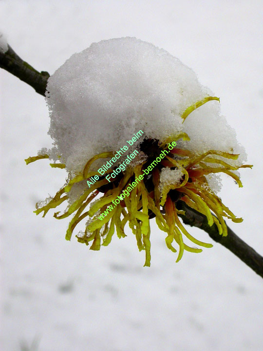 winter-010