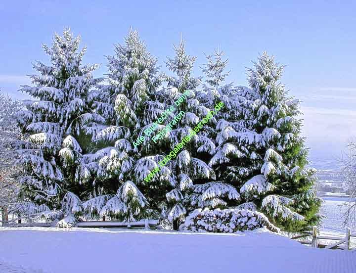 winter-020