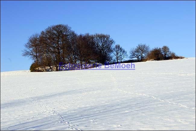 winter-023-herford-an-den-teichen_jpg
