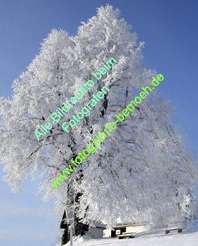 winter-026