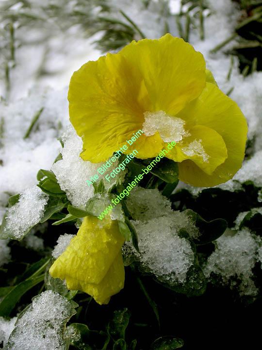 winter-028