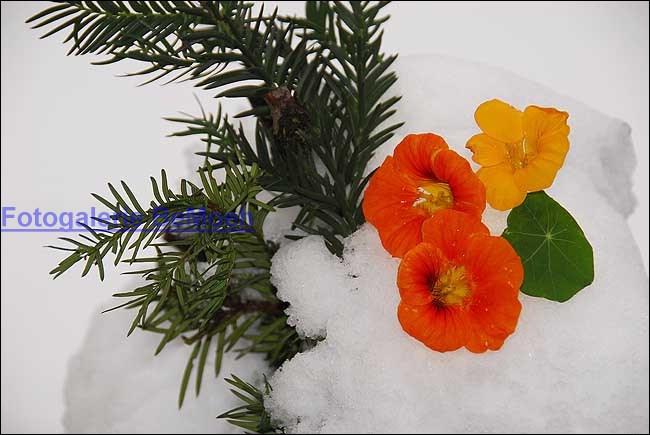 winter-031