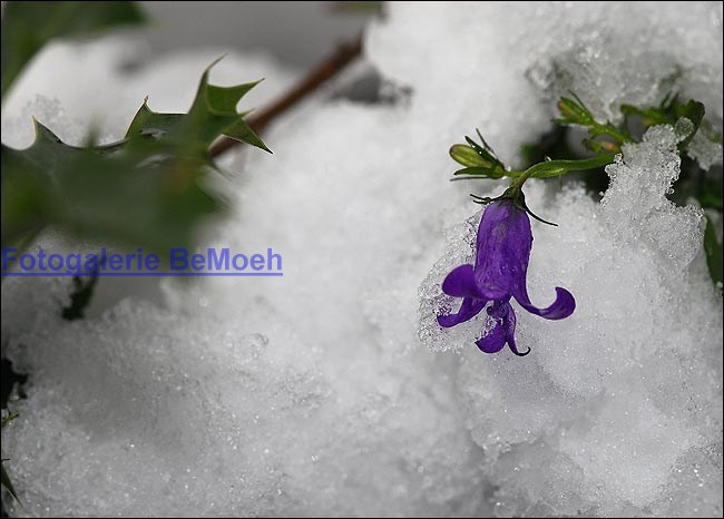 winter-032_jpg